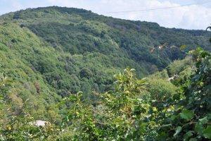 Beykoz'un yüzde 82'si ormandır