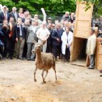 Poloneköy Tabiat Parkı'na 4 geyik