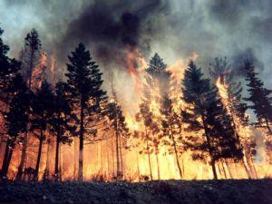 Çavuşbaşı'nda Orman Yangını
