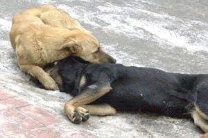 Pompalı tüfekle köpekleri öldürdüler