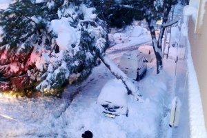 Beykoz'da yağış nedeniyle ağaç devrildi