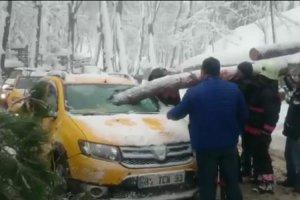 Beykoz'da çam ağacı taksinin içine girdi