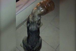 Beykoz'da Kuyu'dan sonra bidon köpek