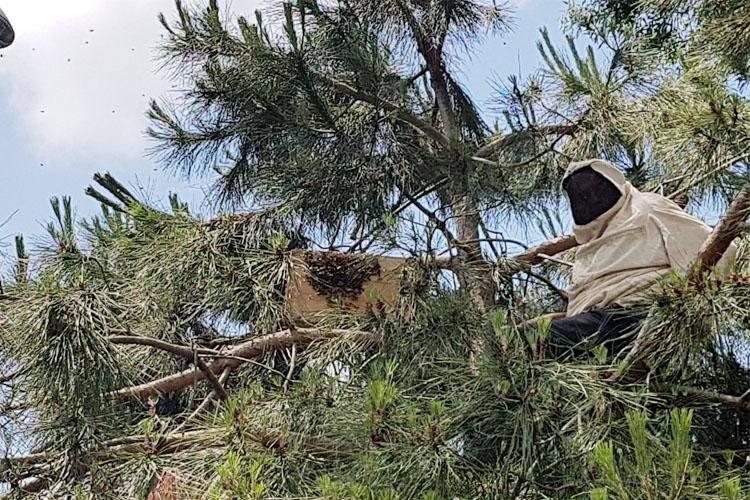 Arı kolonisi Beykoz Sahilinde görüldü