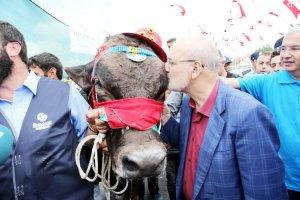 Beykoz'un kurban pazarında renkli anlar yaşandı