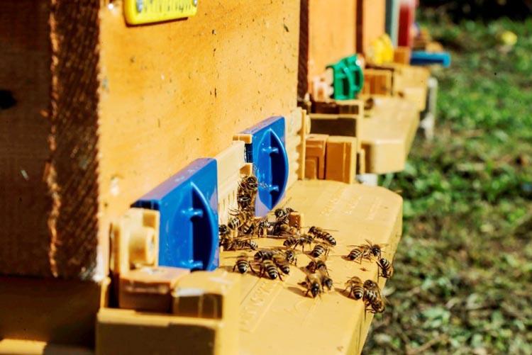 Beykoz'da sertifikalı arıcılar için süre başladı