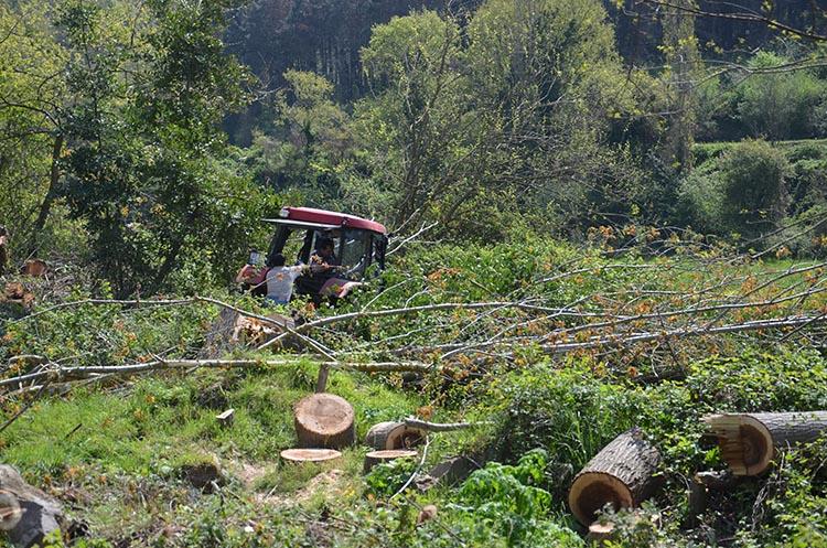 Emir Beykoz'da demir değil ağaç kesiyor