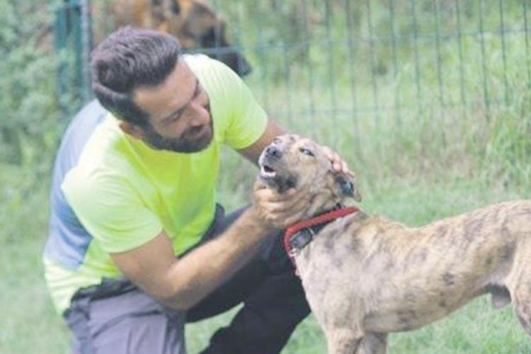 Beykoz'da ezilen köpek sağlığına kavuştu