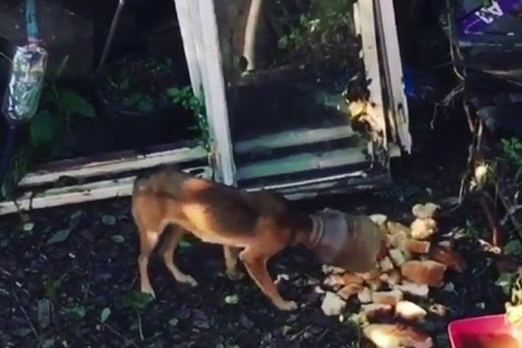 Beykoz'da bidonla yaşayan köpek kurtarıldı
