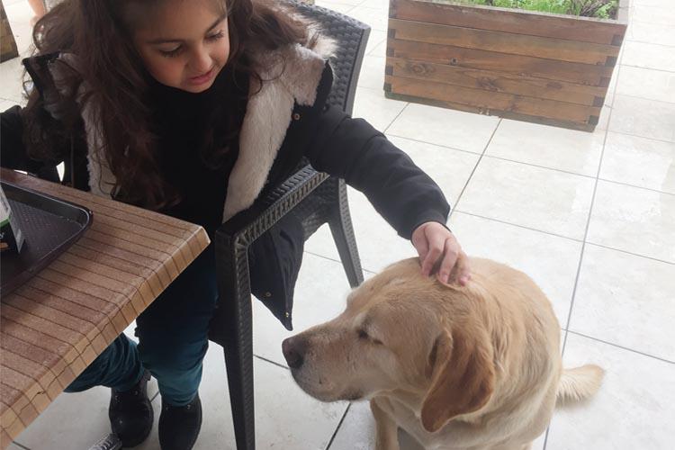 Sokak köpekleri Beykoz'da başrol oynadı