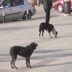 Beykoz'da köpek dehşeti