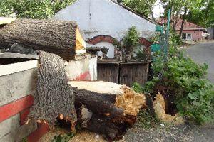 Asırlık çınar ağacı büfenin üzerine yıkıldı