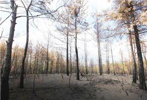 Çavuşbaşı Ormanlarını kim yaktı?