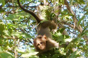 Sedat Simavi Okulu'nda maymun alarmı