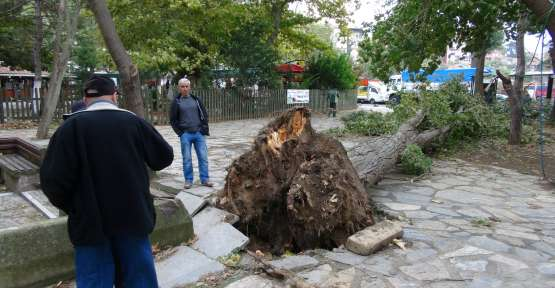 Fırtına Beykoz'da hasara yol açtı