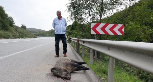 Riva yolunda domuz leşleri bulundu