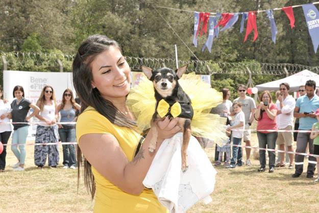 En güzel köpekler Beykoz'da podyuma çıktı