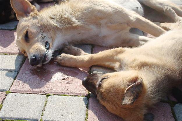 Beykoz'da hayvanlardan ne istiyorlar