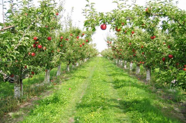 Beykoz'a Hobi'den sonra Meyve Bahçesi...