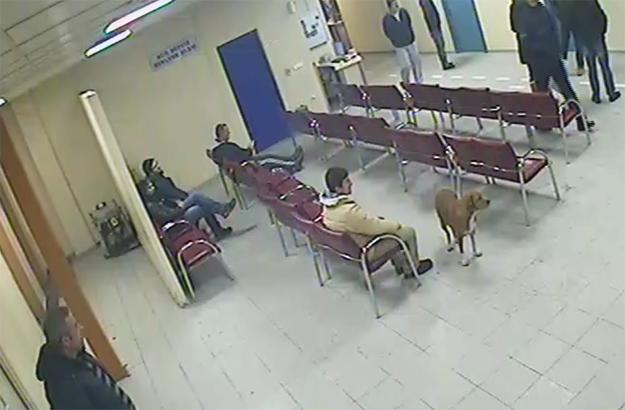 Sözde hayvan severlerin acil servis istismarı
