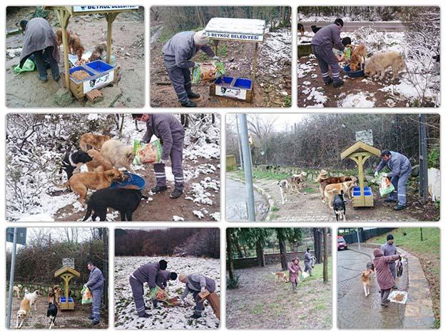 Sokak hayvanları Beykoz'da mutlu!..