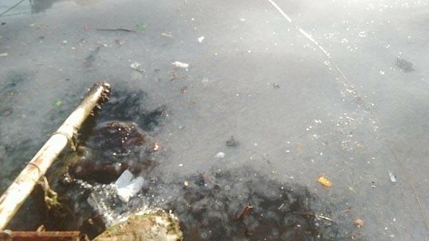 Beykoz'da denizin üstü yağ bağladı