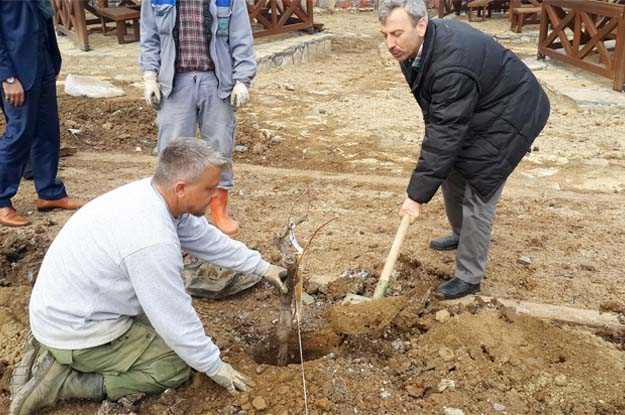 Beykoz'da hasat bu yaz alınacak…