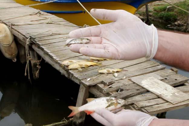 Riva Deresi'nde tehlike büyük… Yine Balıklar ölüyor