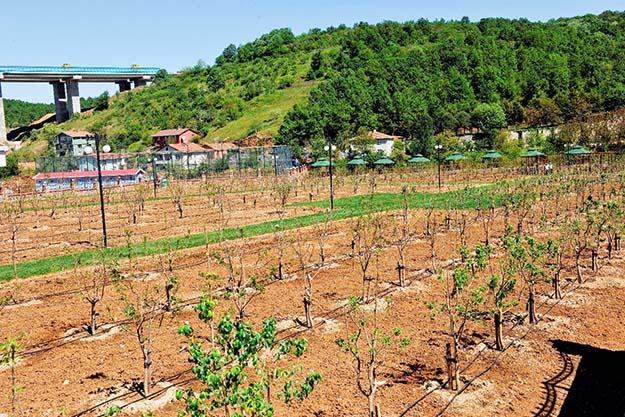 Beykoz'da Meyve Bahçeleri'ni mutlaka görün