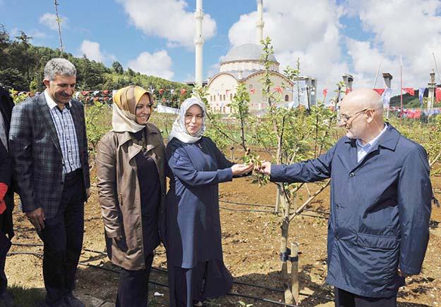 Beykoz'da 17 farklı türde 950 meyve ağacı