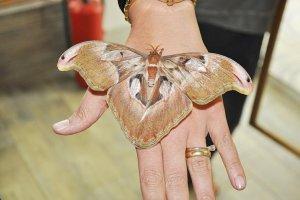 Kelebek Çiftliği, Beykoz'a katma değer sağlıyor