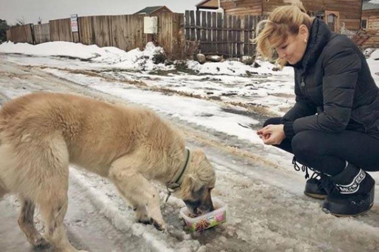 Beykoz'da sokak hayvanlarına ünlü şefkati