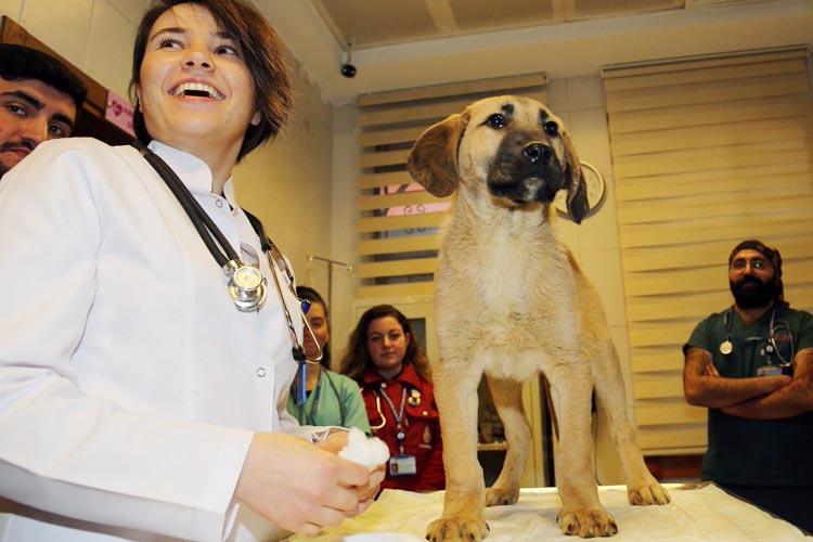 Beykoz'da kurtarılan kuyu köpek karantina da mı?