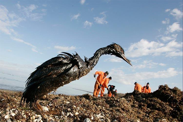 Beykoz'un bilirkişileri ve Türk denizlerinin kirliliği