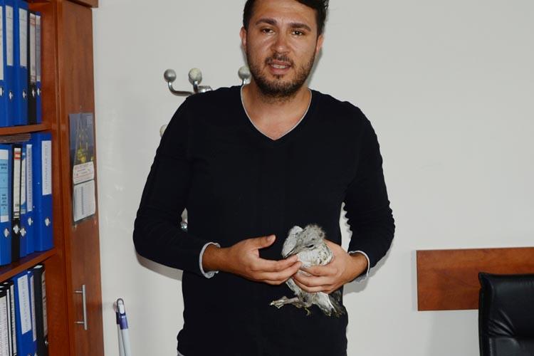 Yavru martı Beykoz'da emin ellere teslim edildi
