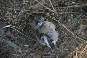 Beykoz'da sebebi bilinmeyen hayvan ölümleri