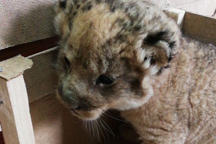 Yurda kaçak sokulan hayvanlar Beykoz'a getirildi
