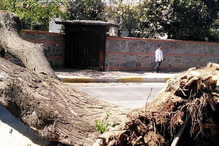 Beykoz Kanlıca'da devrilen ağaç trafiği aksattı
