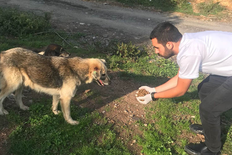 AK Partili gençlerden hayvanlar günü hassasiyeti