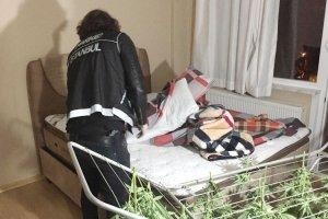 Beykoz'da 100 kilo kenevir yakalandı