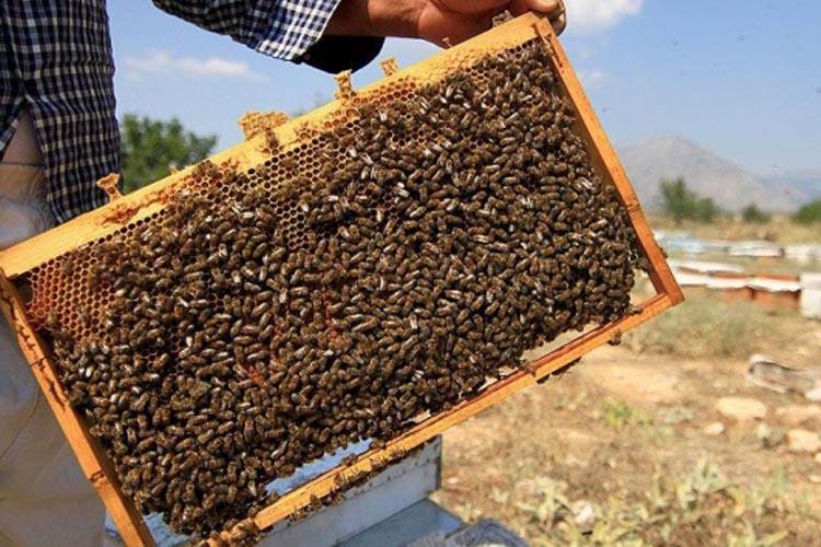 İBB'den Beykozlu arıcılara kovan desteği