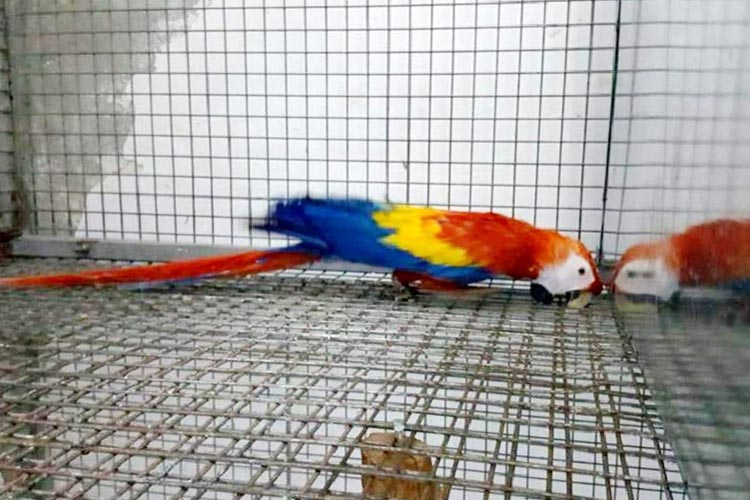 Beykoz Çubuklu'da Papağan ve Saka Kuşu operasyonu