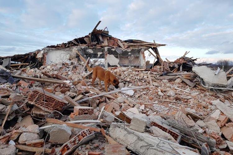 Beykoz Belediyesi hayvan barınağını da yıktı