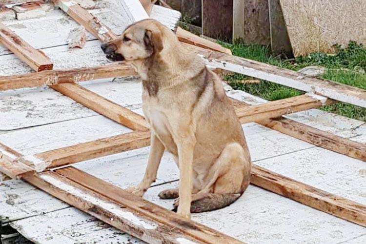 Beykoz'da Hayvan Barınağı ihalesi iptal edildi