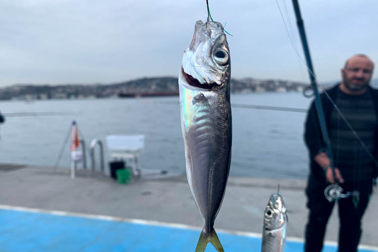Beykoz'da balıklar karaya vurdu