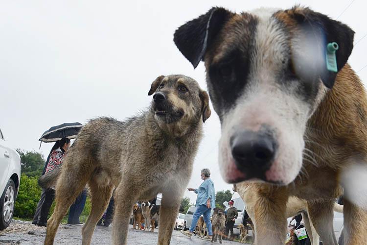 Beykoz'un insanları sokak hayvanlarına can olacak