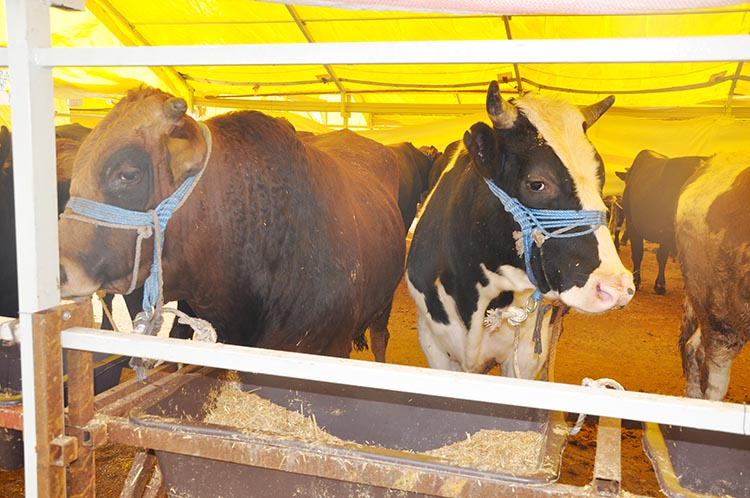 Beykoz'da bu yıl kurban pazarı kurulmayacak