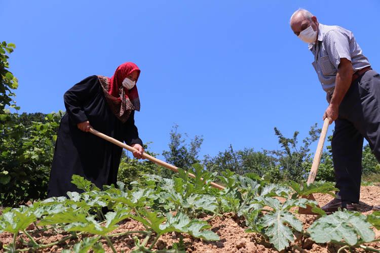 Beykoz'da 3 bin ton karpuz hasadı bekleniyor