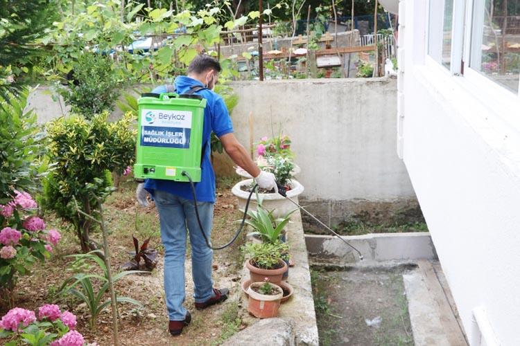 Beykoz'da sivrisinekle mücadele başladı