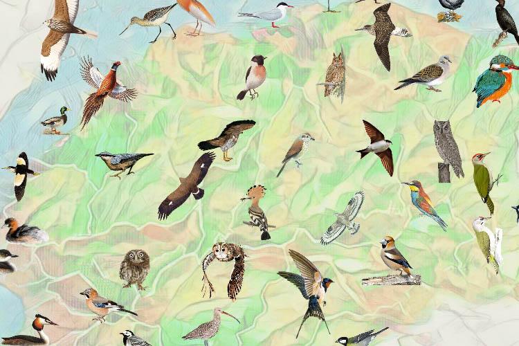 Beykoz'un kuşları ve tabiat alanları